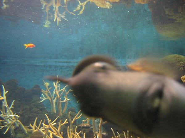 fish_photobomb
