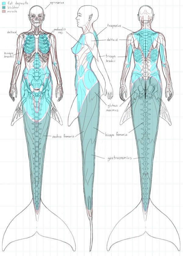 Anatomy of a mermaid