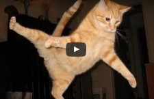 Cute Animal Video of the Day: Cat Epic Failures