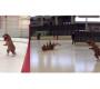 Ice Skating T-rex Mascot send Good Vibes [Cute Video]