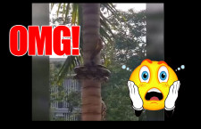 Bizarre Animal Video: Snake Climbing up a Coconut Tree