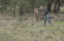 Man Punches a Kangaroo becomes World's Latest Meme