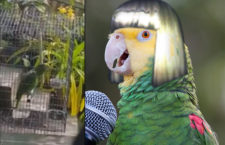 Parrot Singing Sia's Chandelier Goes Viral [Watch Video]