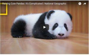panda kawai