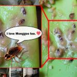 Cebu Resto Serve Monggo Soup with Cockroach gone Viral