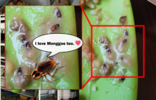 Cebu Resto Serve Monggo Soup with Cockroach gone Viral