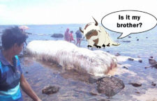 Strange Furry Creature Washed ashore in the Philippines