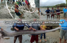 Oarfish caught Days after Surigao Earthquake gets Viral