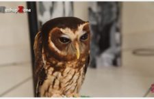 Cute Animal of the Day: Cute Owl Compilation